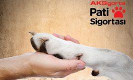 Aksigorta'dan Sokak Hayvanlarına Pati Sigortası