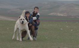 """Kaan Müjdeci'nin Ödüllü Filmi """"SİVAS"""" Online Film Platformu MUBI TÜRKİYE'de Yayında!"""