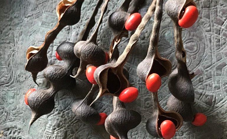 Lalehan Uysal'ın tohum fotoğrafları sergisi Yapı Kredi bomontiada Galeri'de