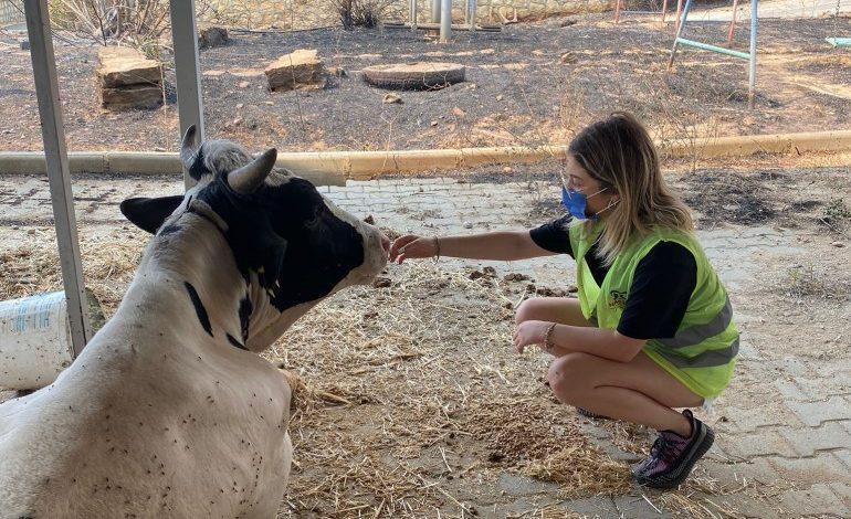 Yangın mağduru hayvanlar için HAÇİKO Yaşam Çiftliği kuruluyor
